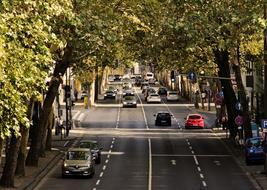Traffic on street beneath trees in city