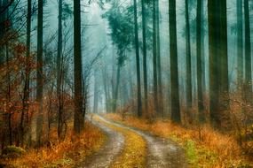 winding road in the autumn forest