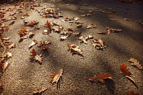 brown oak leaves on a walkway in a park