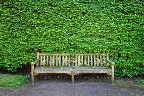 Wooden Bench and geen bush
