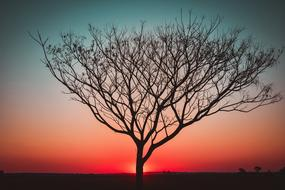 lonely tree on a background of pink sunset