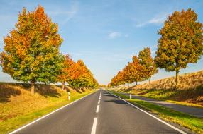 Autumn Trees Sky road