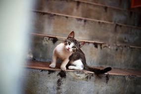 curious kitten on the stairs outside