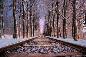 rail road tree