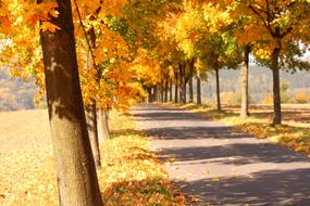 photo of a yellow autumn alley in the park