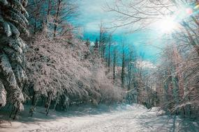 Canada Winter forest