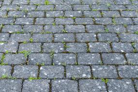 green sprouts of grass on the cobblestones