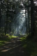 Nature Forest shadow