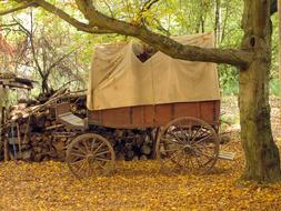 Covered Wooden Cart