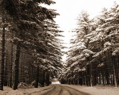 Winter Forest road snow