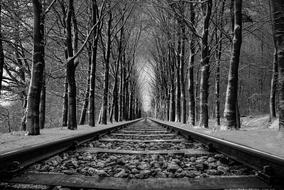 rail road tree monochrome