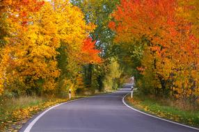 bright autumn leaves along an asphalt country road