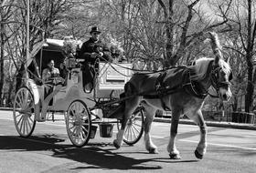 Carriage People Transportation Black And white
