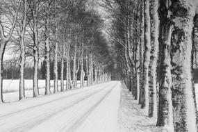 Witer Birch Alley black and white
