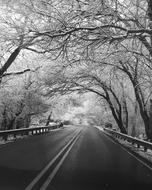 Winter Road Black White