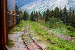 Train Railroad forest