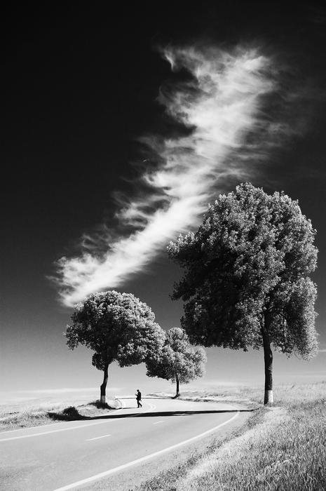 black and white photo of lonely trees along the highway under white clouds
