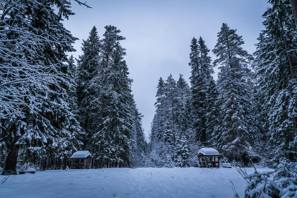 Snow Winter Trees forest