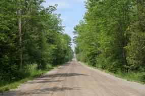 Country Road Dirt forest