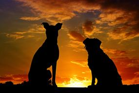 magnificent Dogs Animals