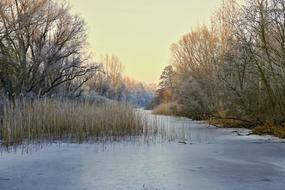 frosted trees around frozen pond, winter landscape