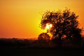 enchanting Sunset Trees Silhouette