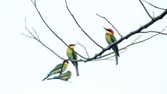 A flock of Kerala birds sits on a branch
