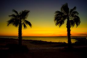 Palm Trees Twilight