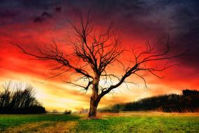 dramatic landscape with a tree