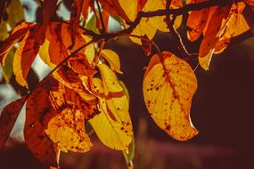 spotted autumn leaves on a tree under the sun