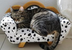 domestic cat sleeps on a spotted sofa