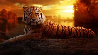Tiger Sunset Fantasy drawing