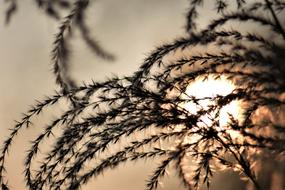 Bamboo Grass and sun