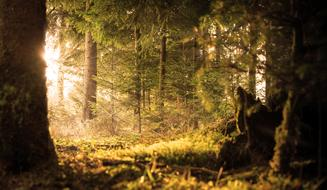 sun rays in a quiet dense forest