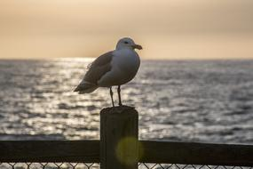 Seagull Perched