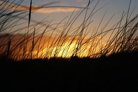 incredibly beautiful Sunset Silhouette Wild Grass
