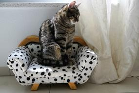 cat Sit Sofa