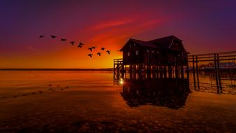 Nature Landscape sunset red birds