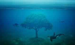 fantastic image of a turtle, killer whale and tree under the ocean