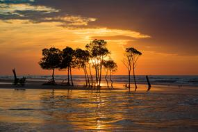 gold Sky Sunset trees