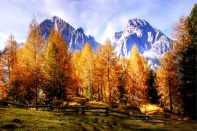 Tofane Dolomites Nature tree