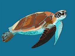 e sea turtle animal underwater drawing