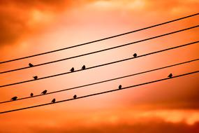 Birds On A Wire Sunset