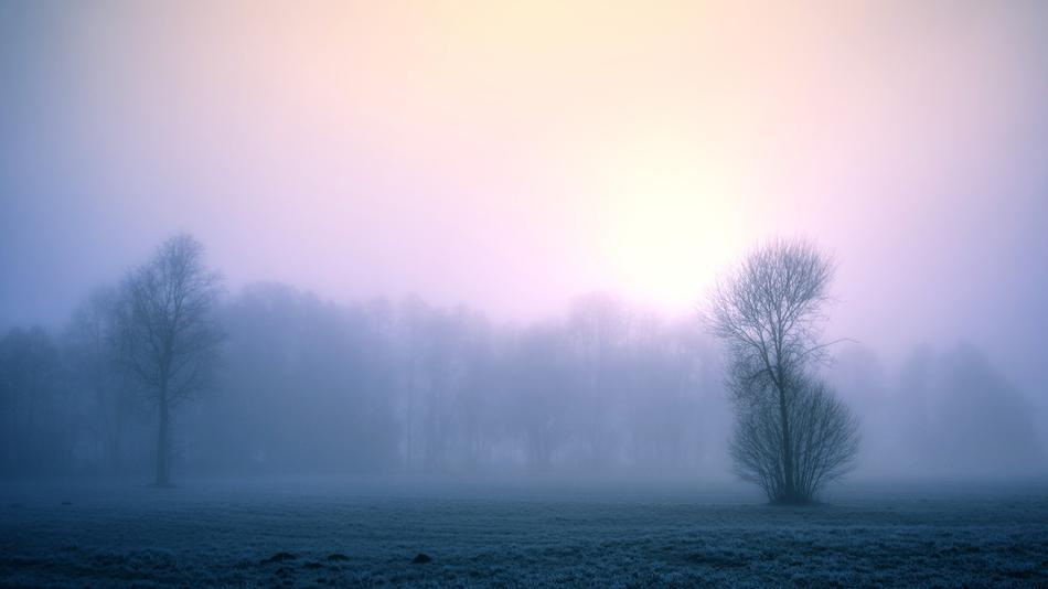 dense fog in front of the forest