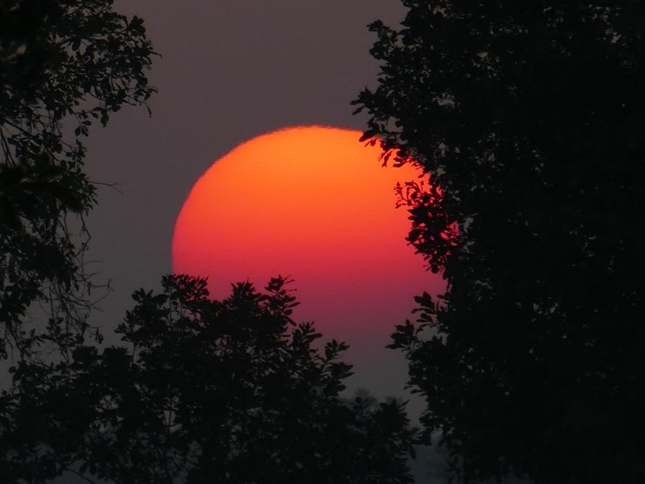 orange-red sun behind the trees