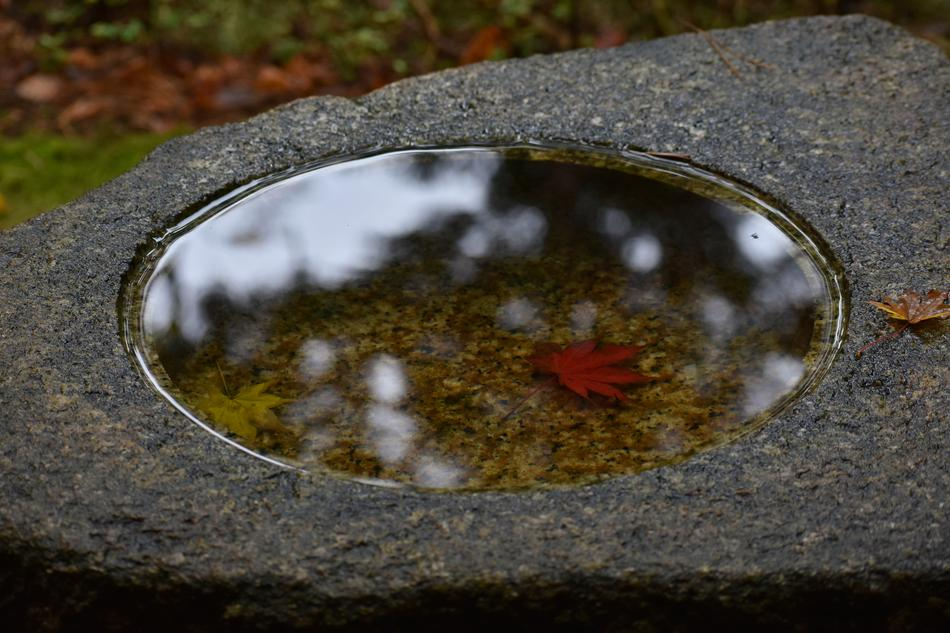 puddle on a stone in a Japanese garden