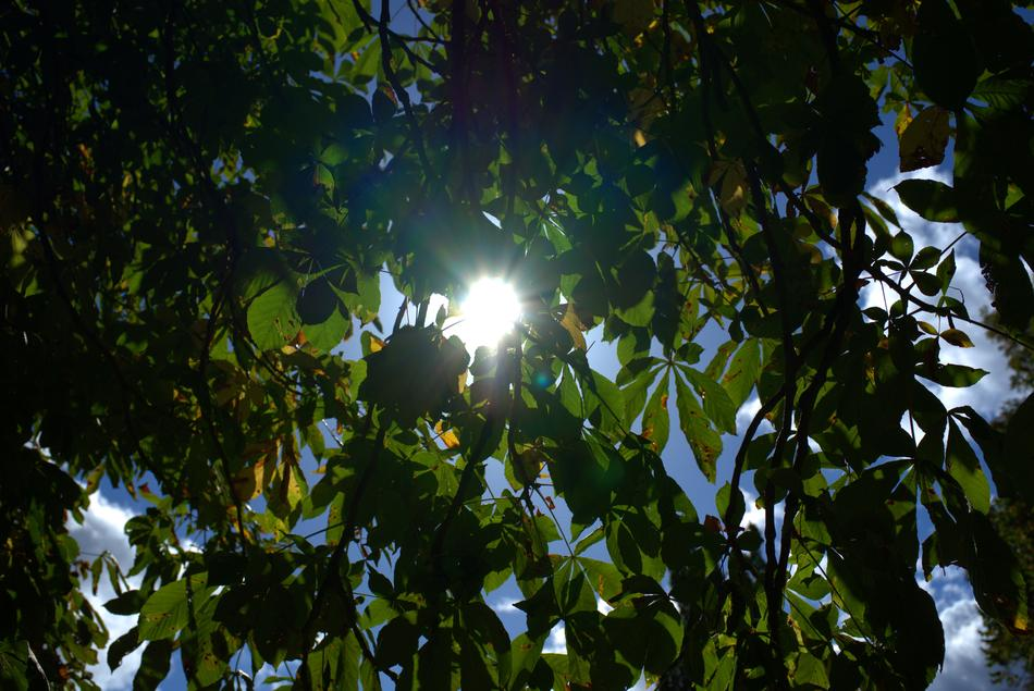 Sunlight and Leaves of Tree