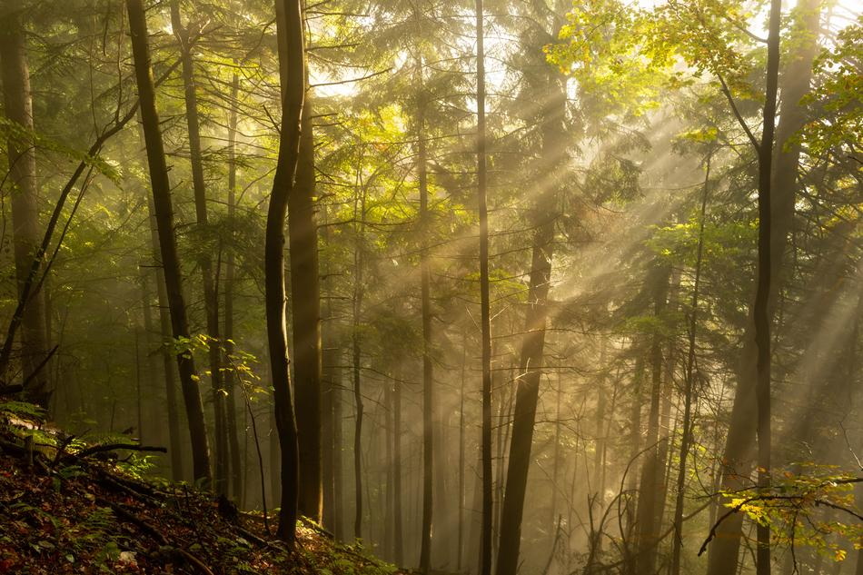 Rays of the morning sun in the beautiful forest with colorful plants