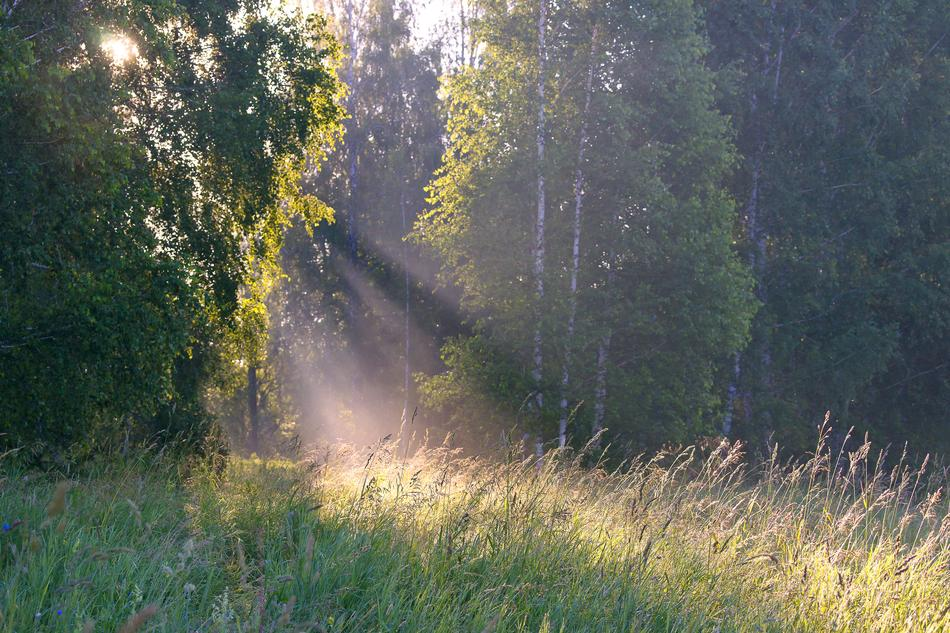 rays of the morning sun and fog over a green meadow