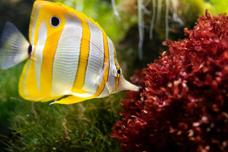 yellow white Fish Aquarium